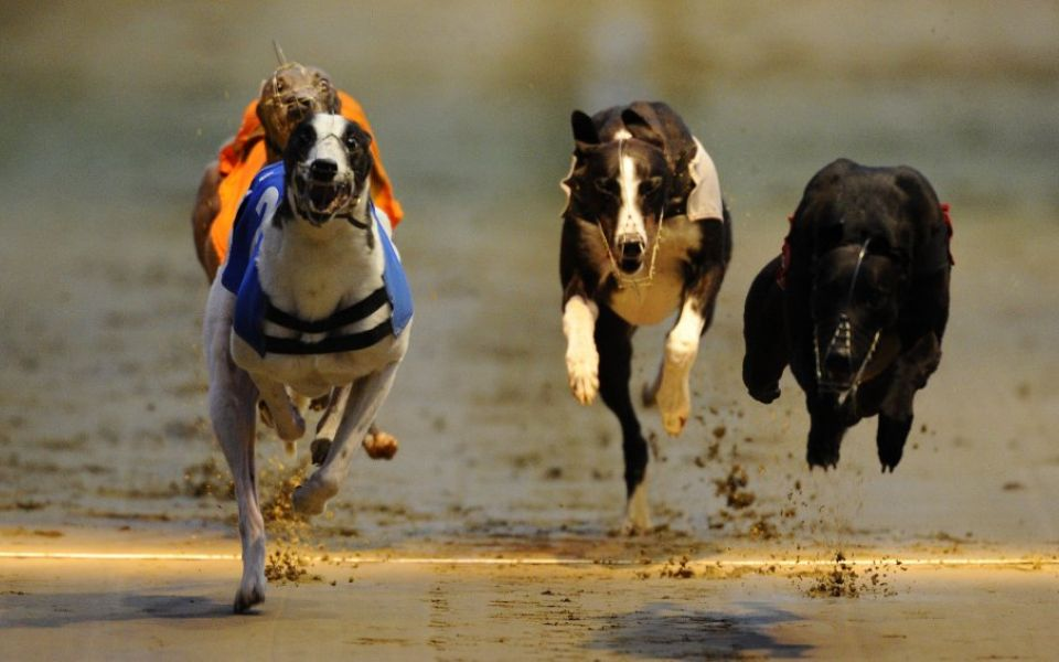 Tips for greyhound betting overbetting wednesday images