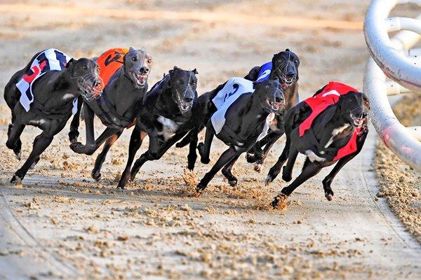Greyhound dog racing betting online nba championship betting line
